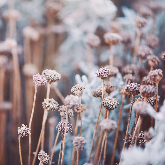 4 easy ways to protect plants from winter frost