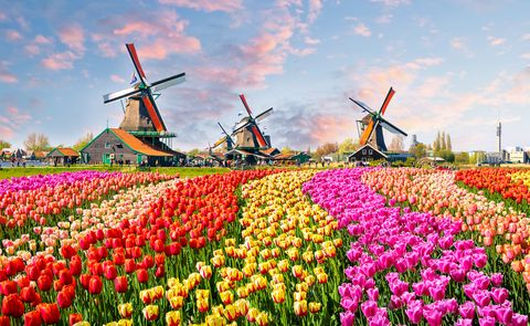 Garden holidays - tulips in Amsterdam