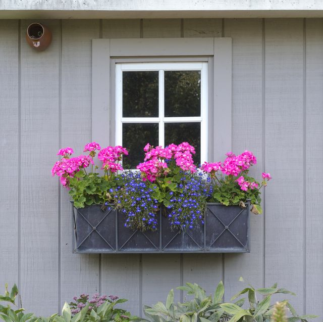 20 Window Box Ideas Creative Window Boxes