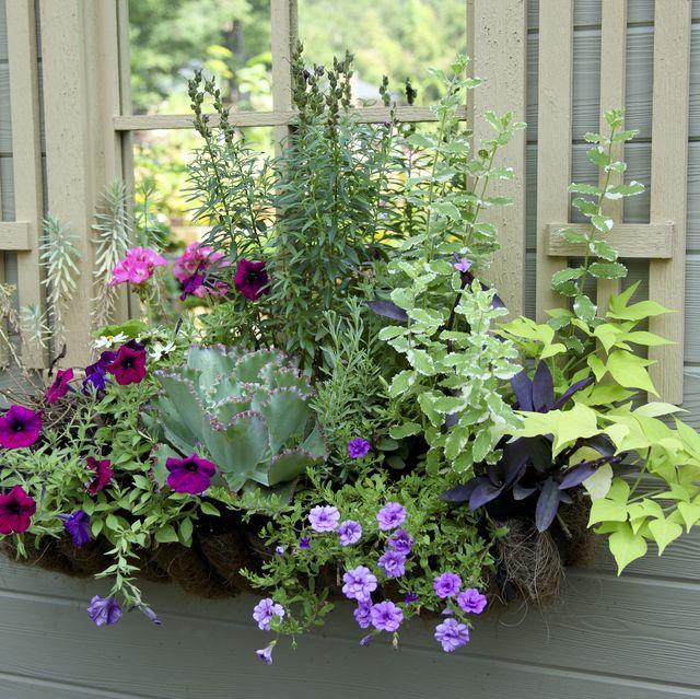 Window Box Planter Ideas: 20 Planter Box Ideas To Inspire You