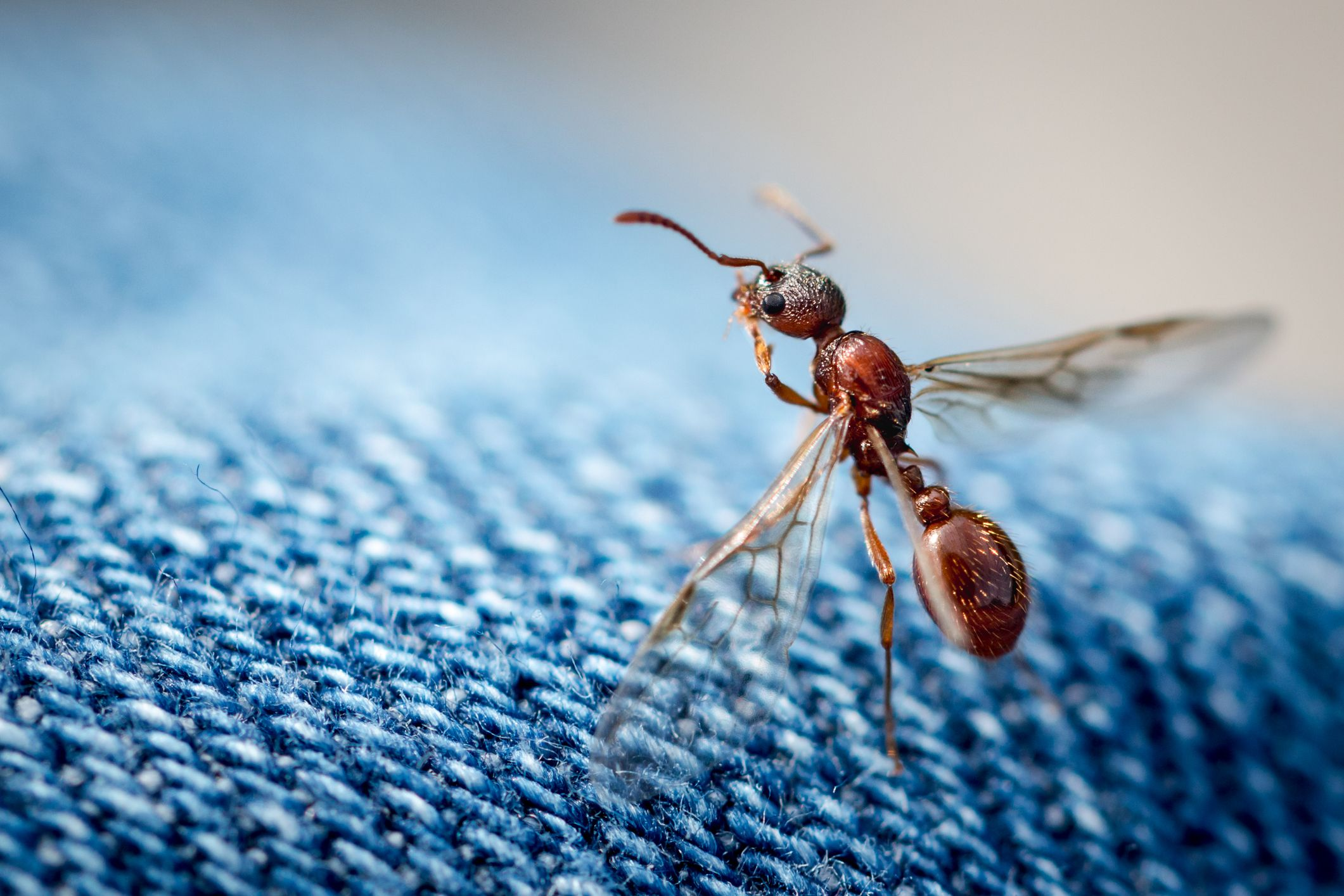 How To Get Rid Of Flying Ants In Your Home According To Pros