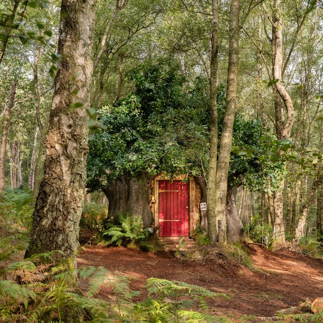 airbnb lists disney's winnie the pooh in the original hundred acre wood