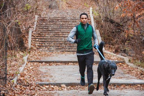 Green, Dog, Dog walking, Canidae, Tree, Walking, Leash, Sporting Group, Autumn, Photography,