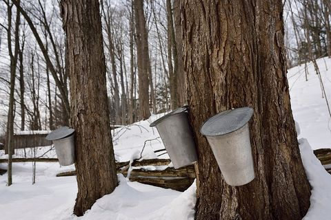 National Maple Syrup Festival in Indiana - Best Winter Festivals