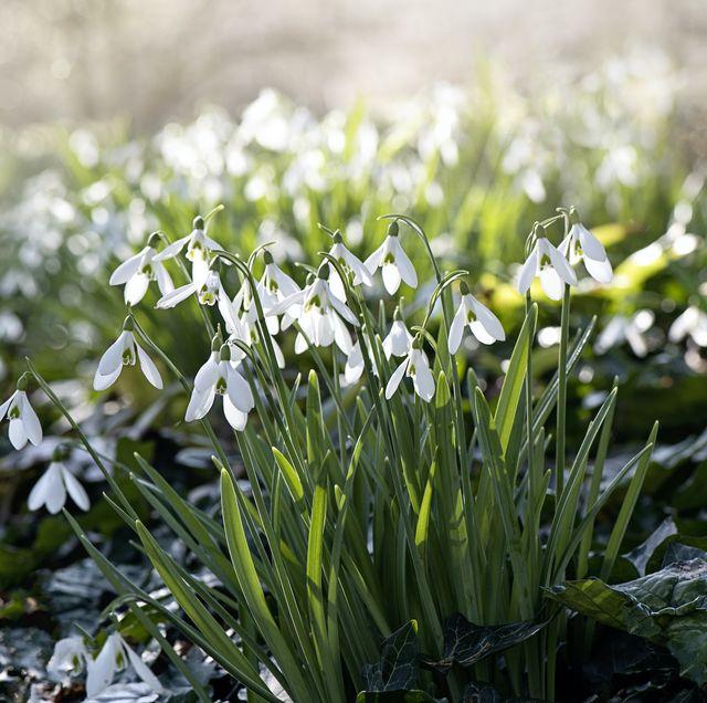 12 best winter flowering plants for your garden