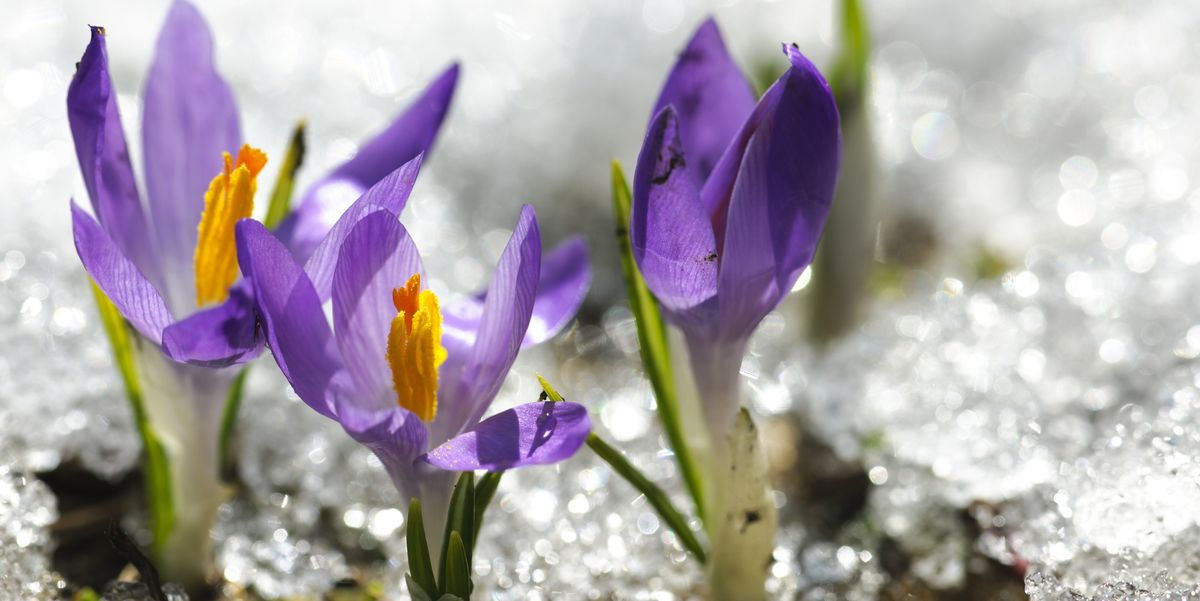 19 Best Winter Flowers That'll Add Color to Your Garden