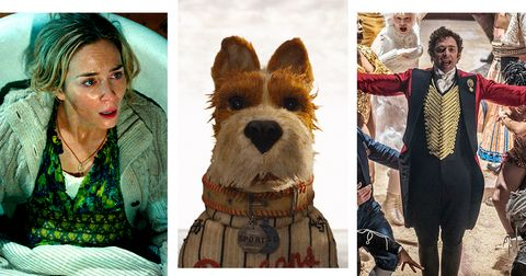 Dog, Canidae, Dog breed, Companion dog, Yorkshire terrier, Carnivore, Terrier, Australian terrier, Norwich terrier, Collage,