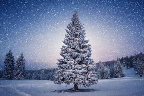 kerstboom in sneeuwlandschap