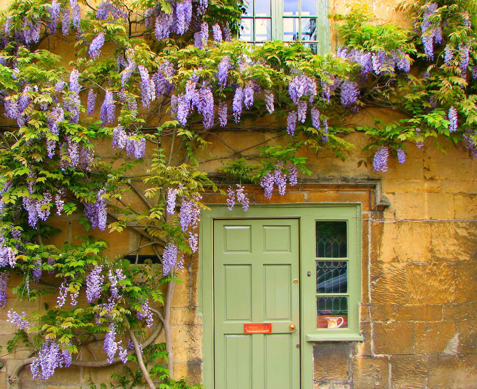 11 Best Climbing Plants For The Garden