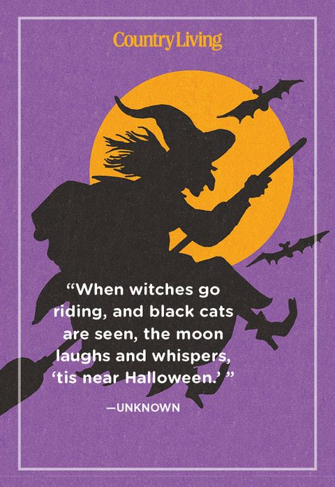 unknown quote about witches and black cats