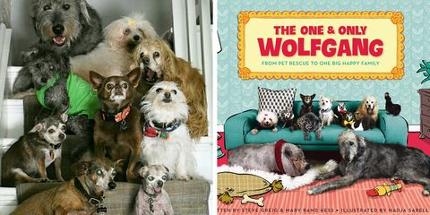 The one &only WolfGang Children's book