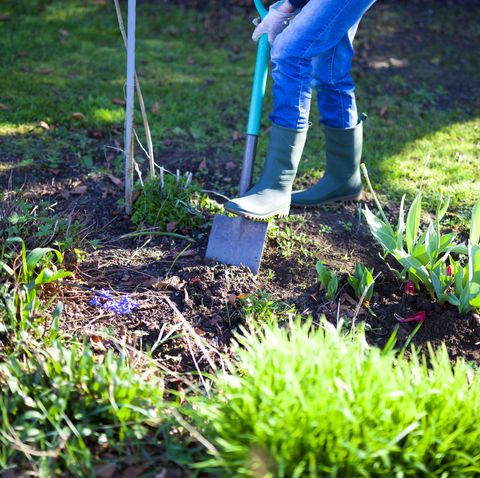woman digging a hole in the garden with a spade