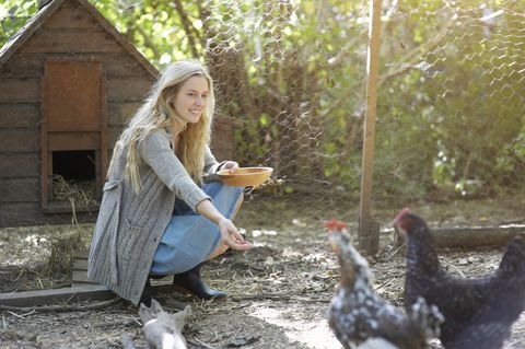 Woman feeding chickens in chicken run.
