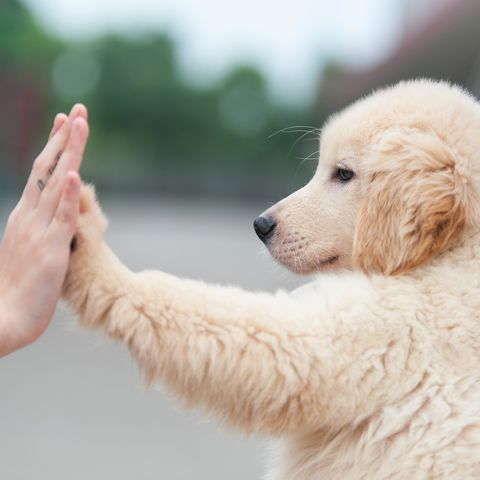 netflix s new docuseries about dogs is going to rip your heart out
