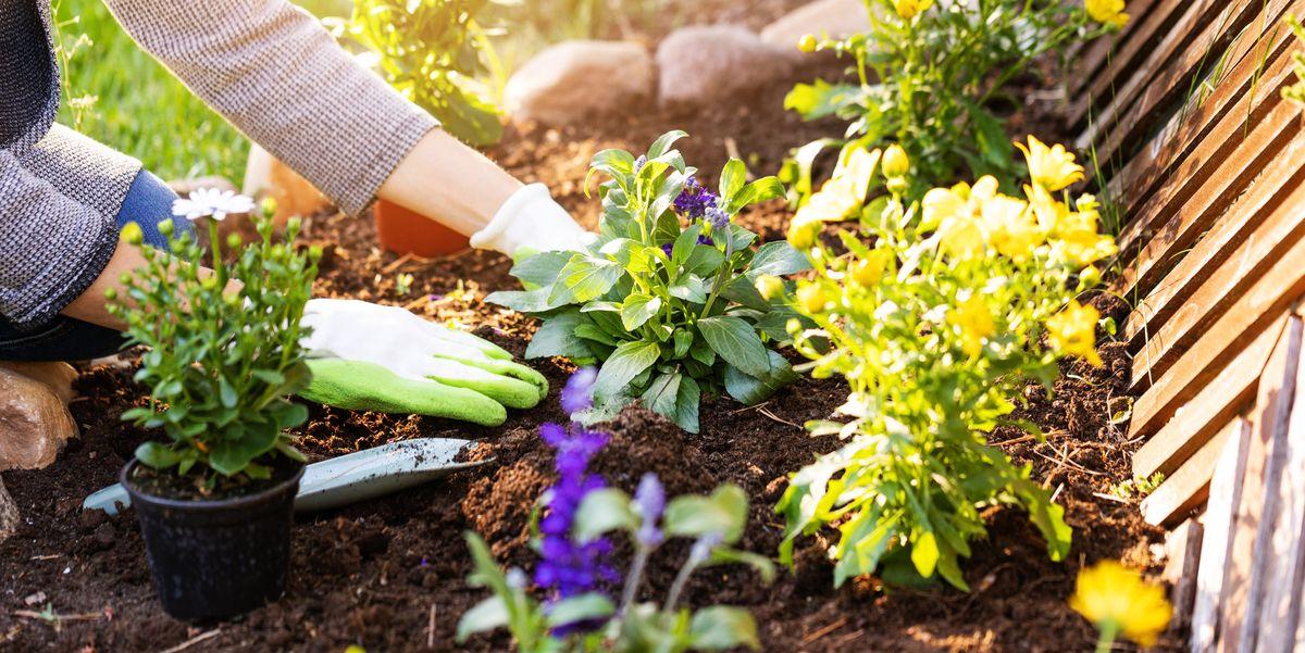 Garden Soil Types Of Soil And Ph Soil Testing Beginner S Guide