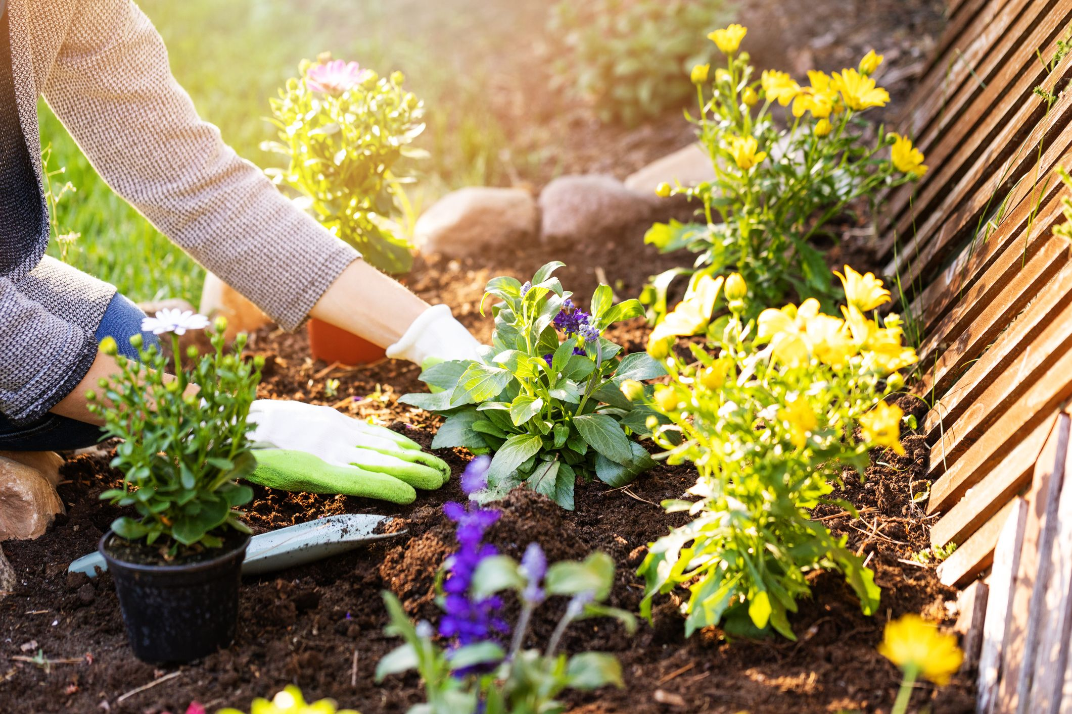 What to plant in your garden: a month-by-month guide