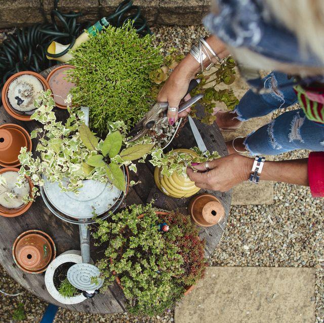 woman tending to plants in garden