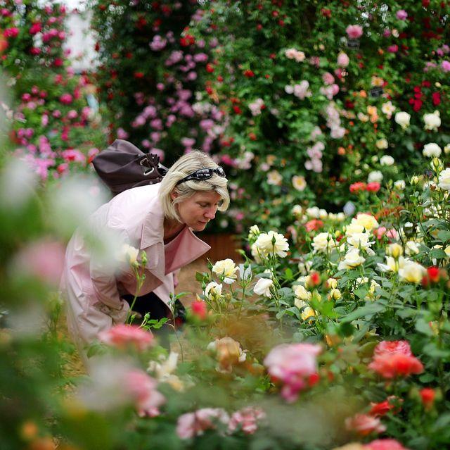 rhs my chelsea garden