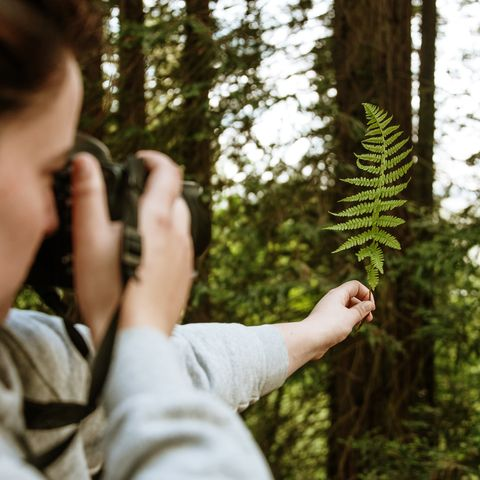 woman taking a picture of a green fern with a dslr camera