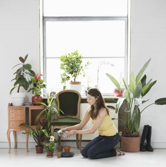 best air-purifying house plants