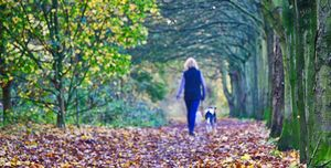 Rear View Of Woman Walking With Dog In Forest During Autumn