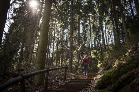 Hiking In Saxon Switzerland