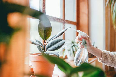 Woman watering houseplants
