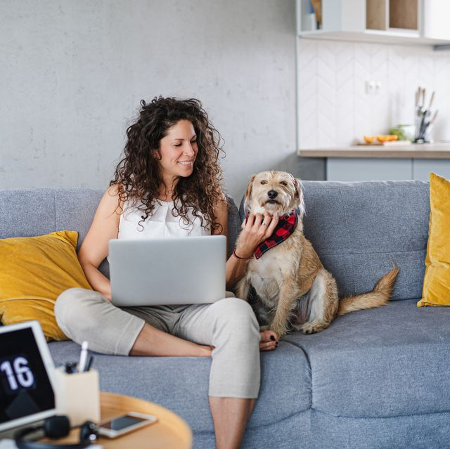 woman with pet dog sitting and working indoors at home using laptop
