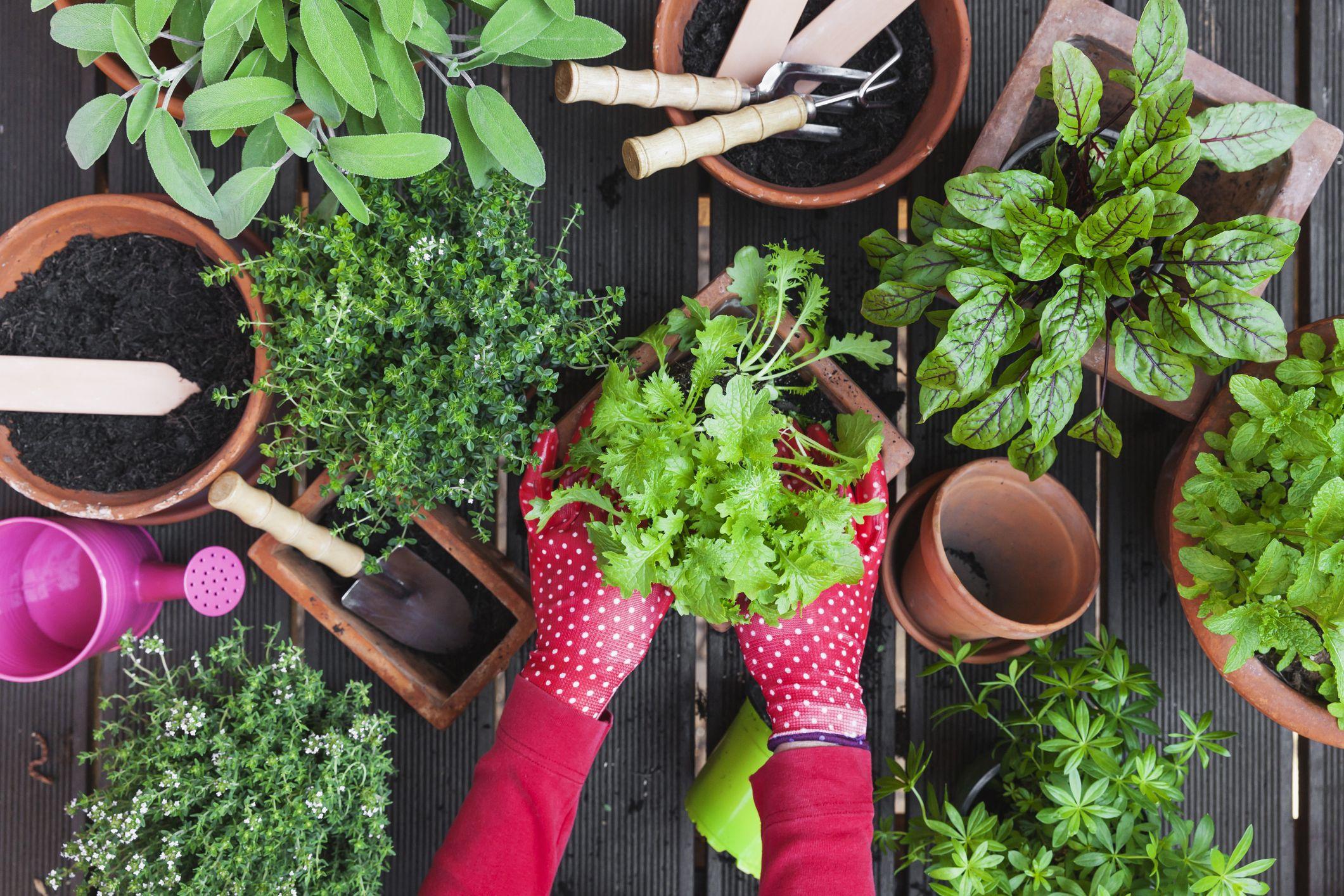 Indoor Vegetable Garden Diy Indoor Garden