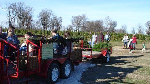 30 Best Christmas Tree Farms - Christmas Tree Farms Near Me