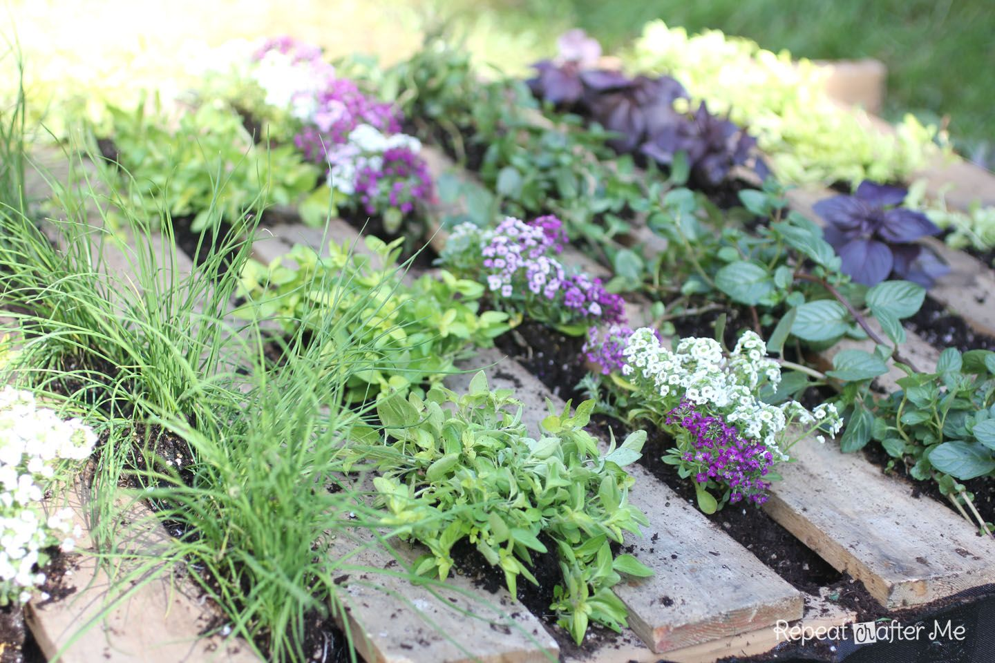 Herb Garden, Small Garden Ideas