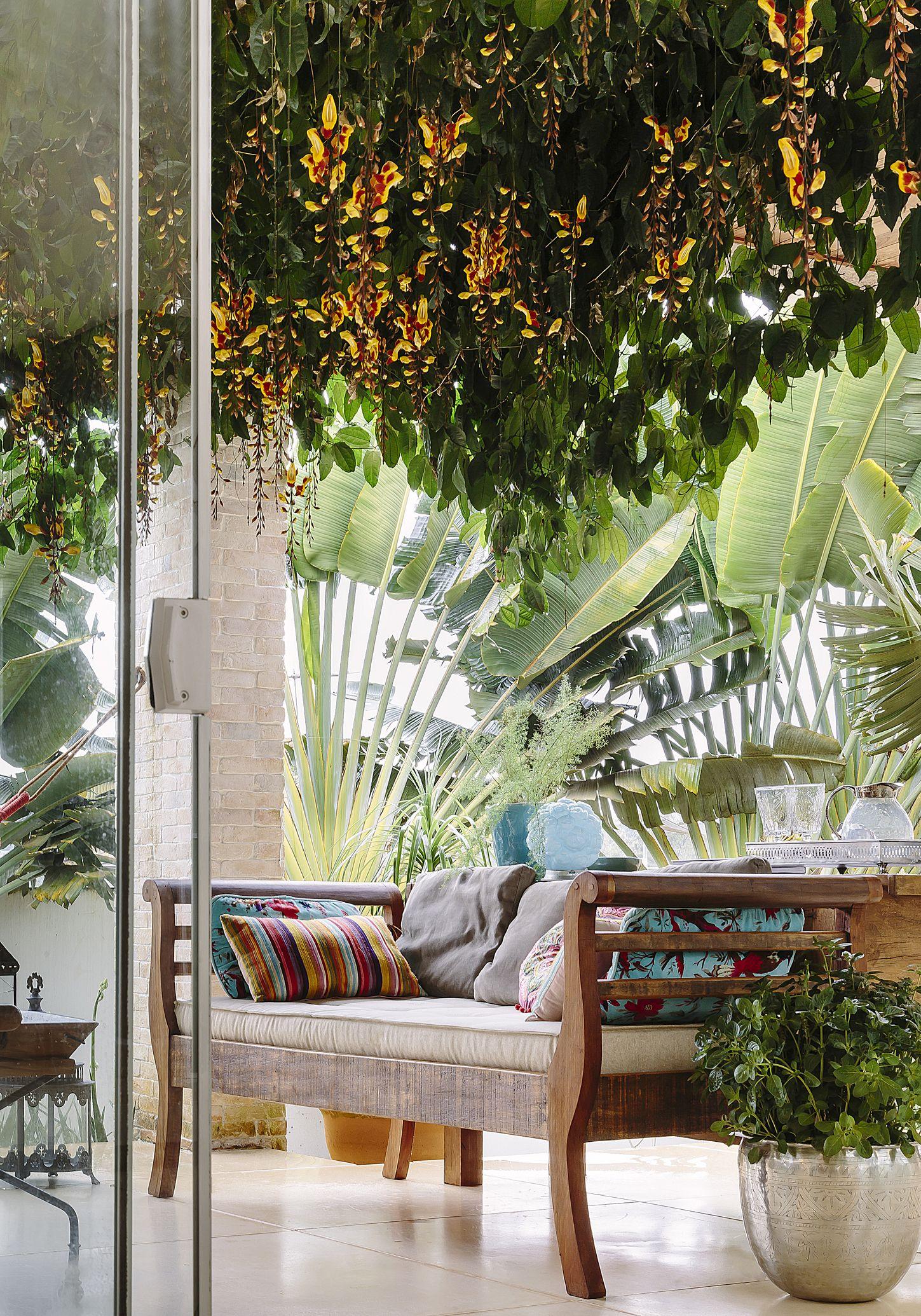 Piante Eleganti Da Appartamento piante tropicali da appartamento, tendenze 2019