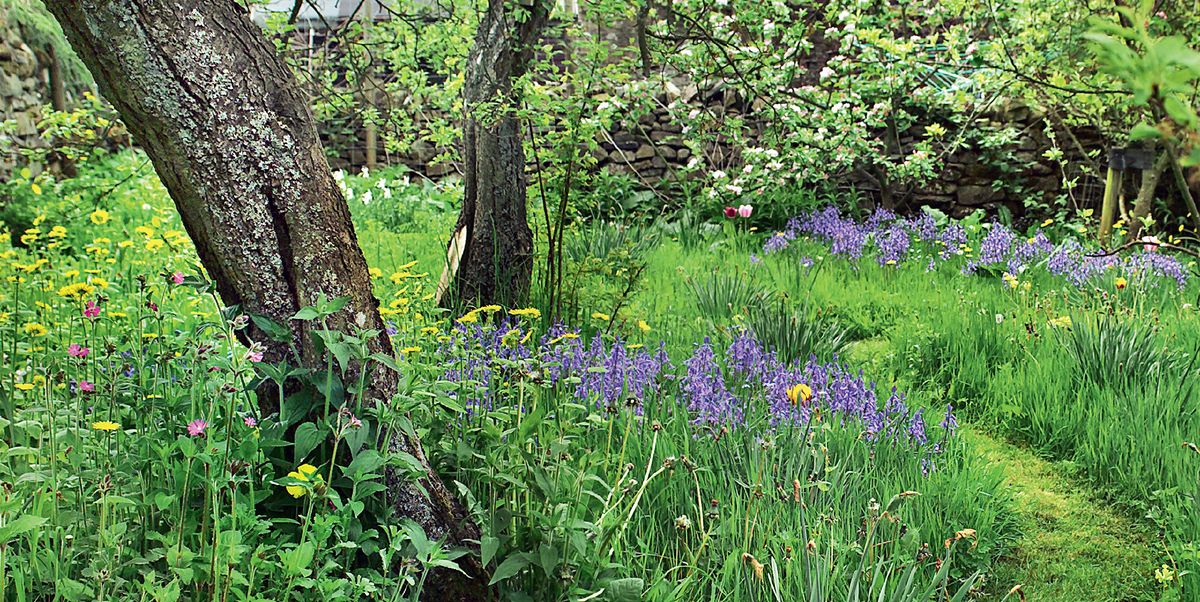 8 design ideas for a woodland garden