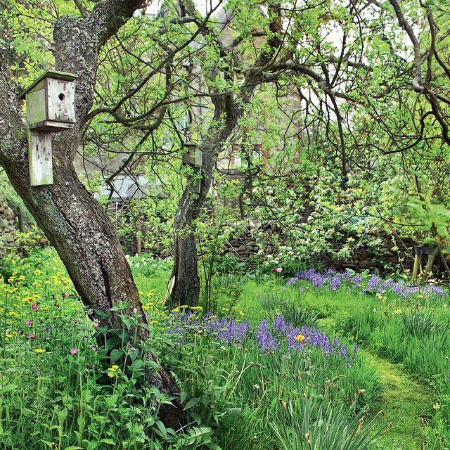 woodland garden design ideas