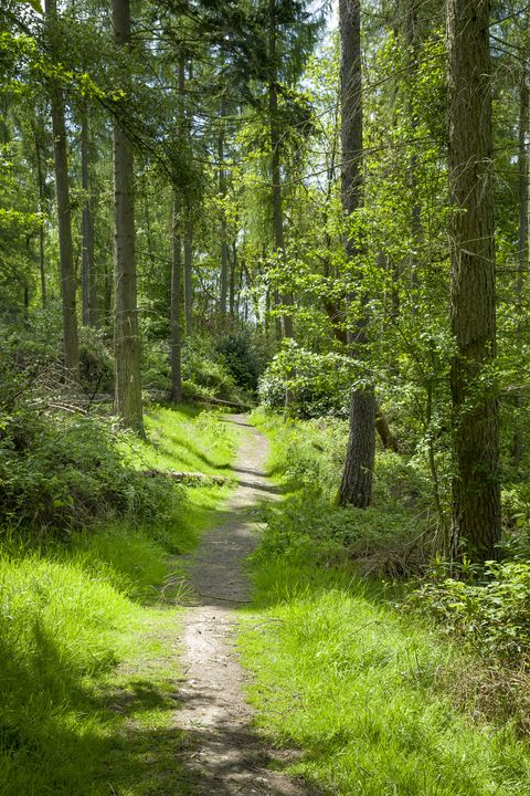 woodland trail in chilterns, uk