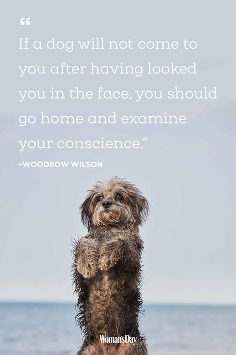 Funny Dog Quotes 20 Cute Dog Sayings That Describe Your Pup