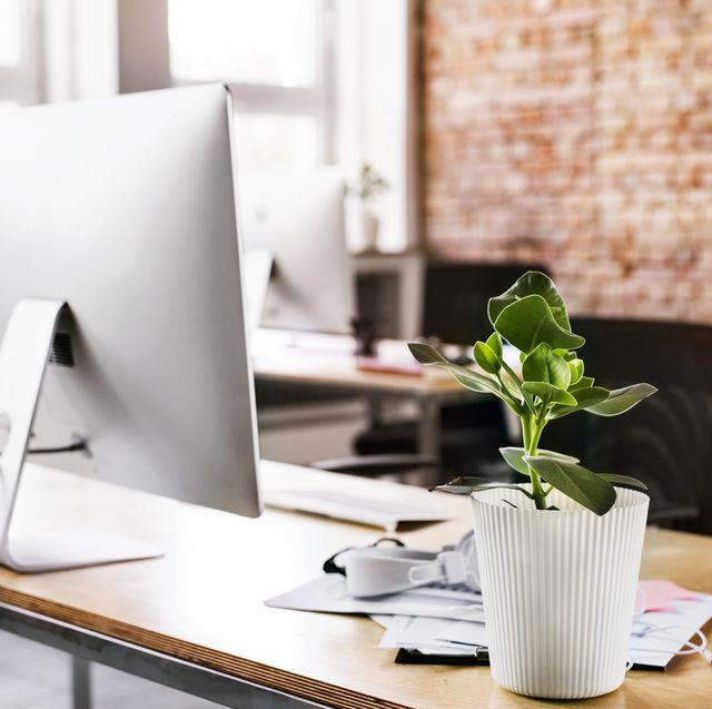 The Best Office Plants - Plants That Will Thrive on Your Desk Garden Light Home Office Furniture Online on home bedroom light, art light, outdoor furniture light, bedroom furniture light, desk light, bathroom light, living room light, home office wall unit, vanities light, home security light,