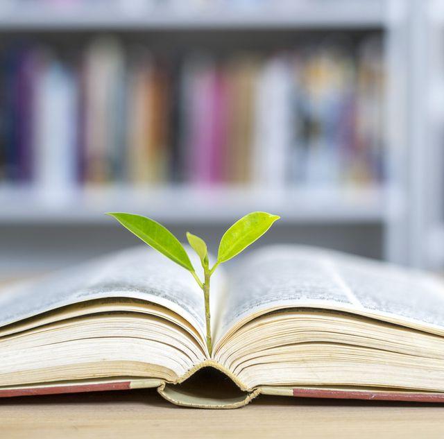 een zaadje die uitgegroeid is tot een plant door de kennis van een boek