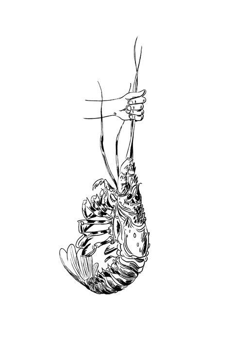 illustrations by wesley allsbrook