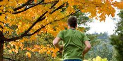 fall-run.jpg