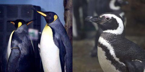 全台首間「企鵝咖啡館」確定進駐x park水族館!國王企鵝、麥哲倫企鵝陪你喝咖啡