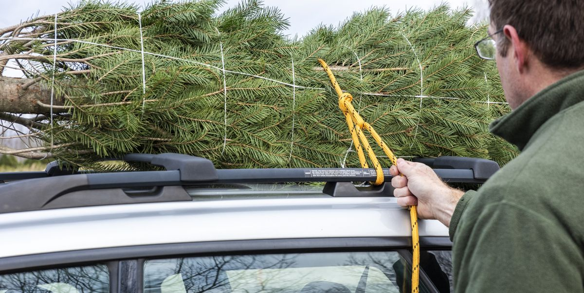 db7728b3313b3 How to Tie a Christmas Tree to a Car | Transport a Christmas Tree