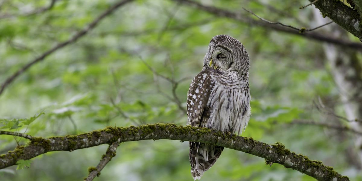 How To Attract Owls To Your Yard How To Install An Owl Box