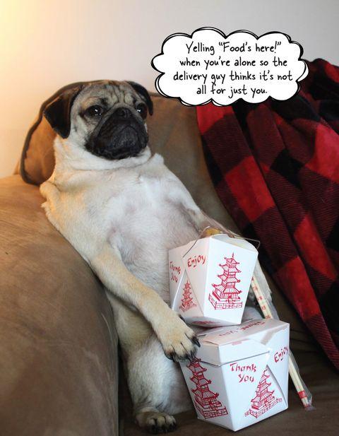 6 hilarious memes that prove you are basically dug the pug doug