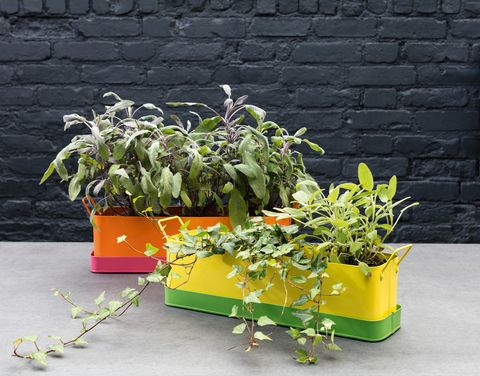 Yellow And Green Metal Window Box