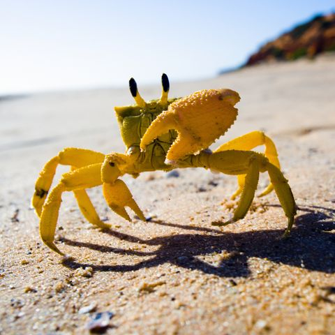 Yellow crab moving on sand