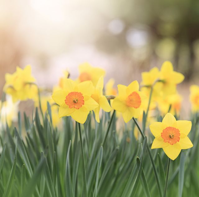 15 Best Early Spring Flowers Early Blooming Spring Flowers For