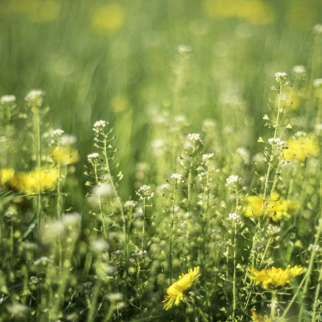 6 ways to ease hay fever symptoms when indoors