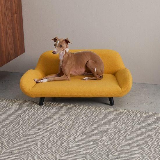 madecom launches stylish pet range