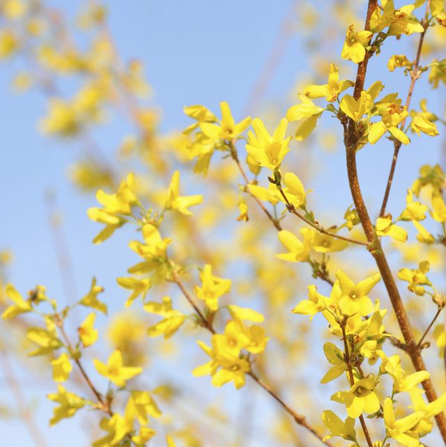 the best sunshine yellow flowers for spring and summer